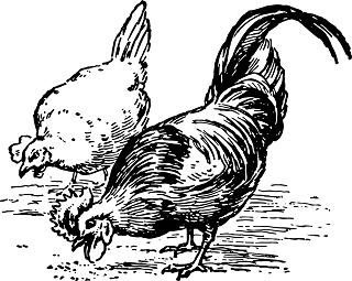 chickens-1093525_640