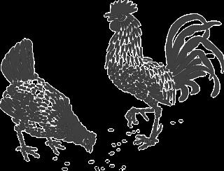 chickens-308459_640