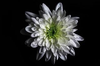 flower-1011420_640