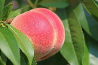 peach-2721852_640-e1531331709769.jpg