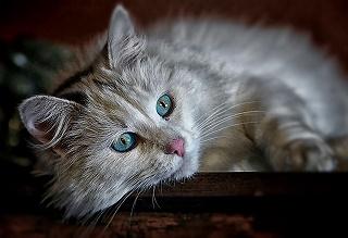 cat-1146504_640.jpg