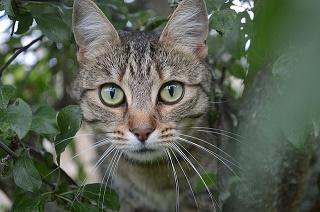 cat-1284973_640.jpg