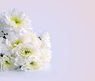 flowers-164028_640.jpg