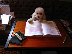 イメージ 犬 本 教育 教科書
