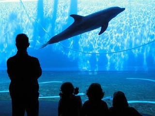 イメージ 魚 水族館