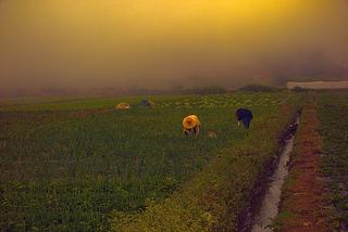 農地 農業