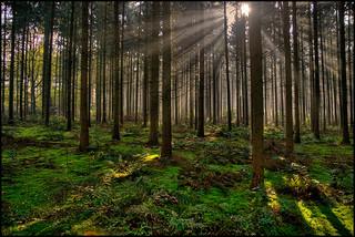 森 木 林