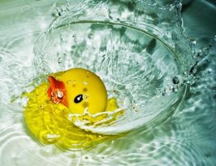 アヒル ダック 水 イメージ