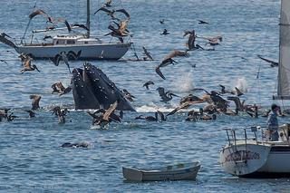 イメージ クジラ